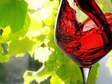 Вино – гастрономический тур (фото 1)